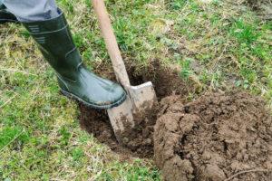 Shovel in ground overturning dirt