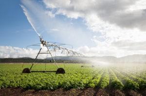Irrigation Pivot in Bean Field